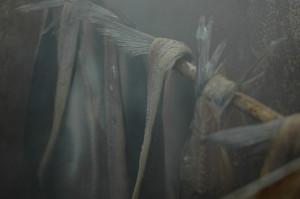 Tørket sild i røykovnen2_600